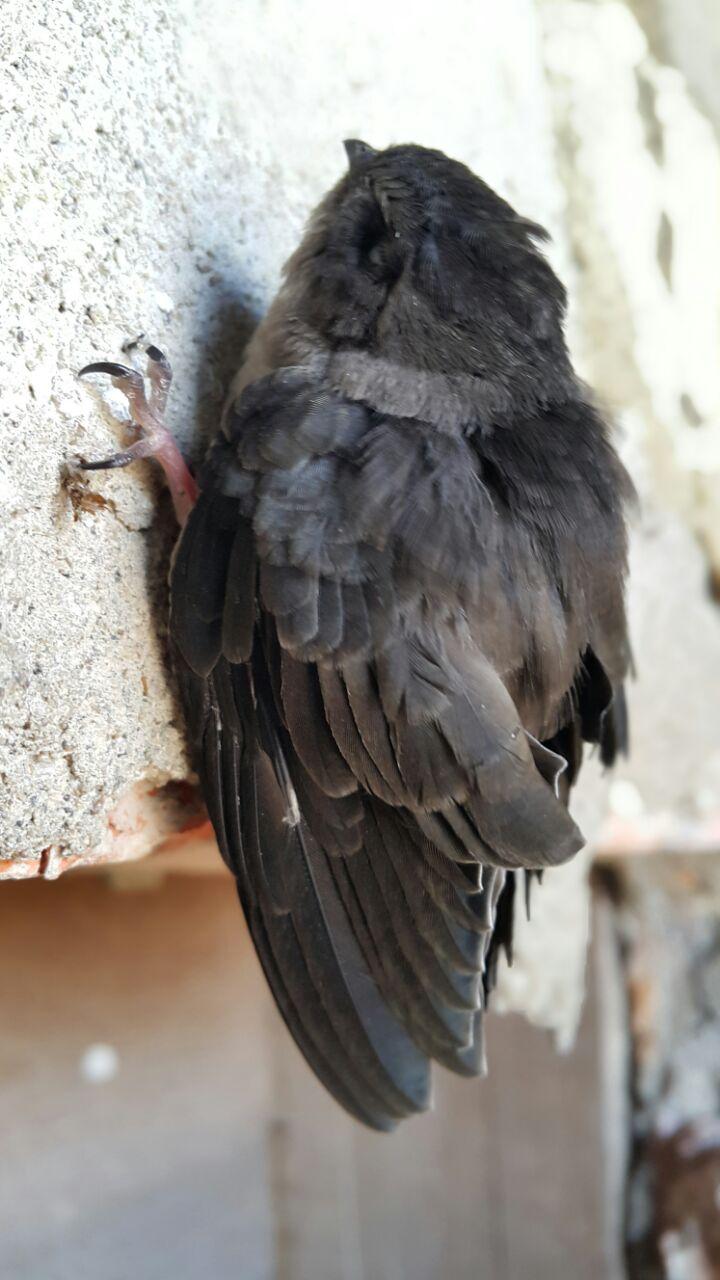 5 Kekurangan Burung Walet Dunia Walet